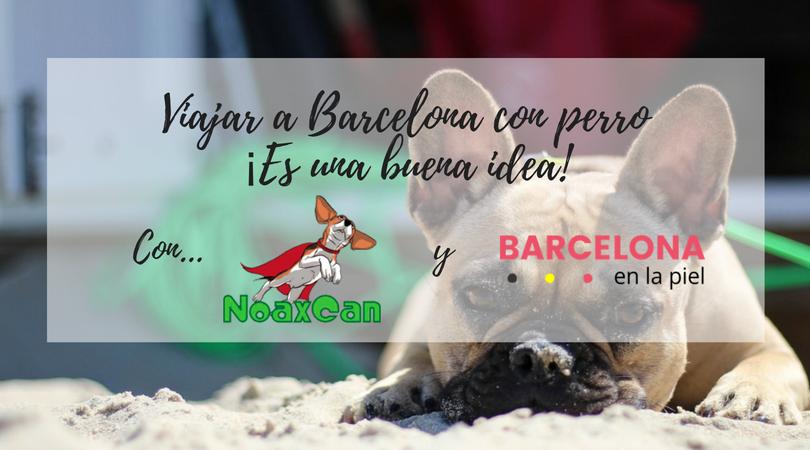 Viajar a Barcelona con perro ¡Una idea genial!